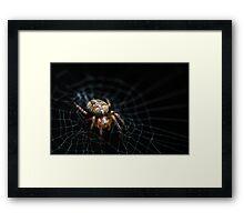 Spider on the Web  Framed Print