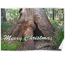 Giant Tingle Tree, Valley of Giants, WA Poster