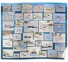 HOODED PLOVER LOG ~ The Hooded Plovers of Marion Bay Beach by tasmanianartist Poster