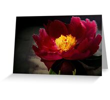 Fresh Cut Peony Greeting Card