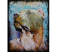 Pit Bull. Photographic Print