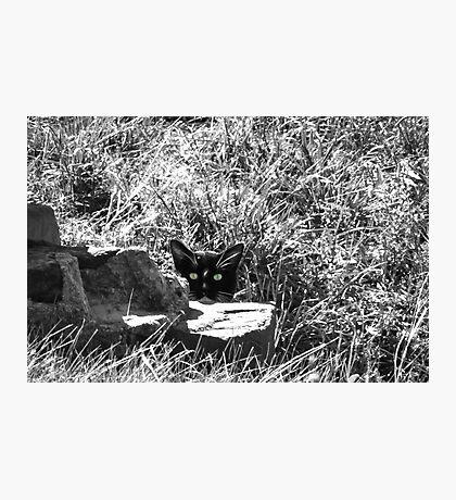 Wild cat green eyes Photographic Print