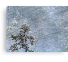 12.1.2017: Pine Tree in Blizzard Canvas Print