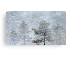 12.1.2017: Pine Tree in Blizzard II Canvas Print