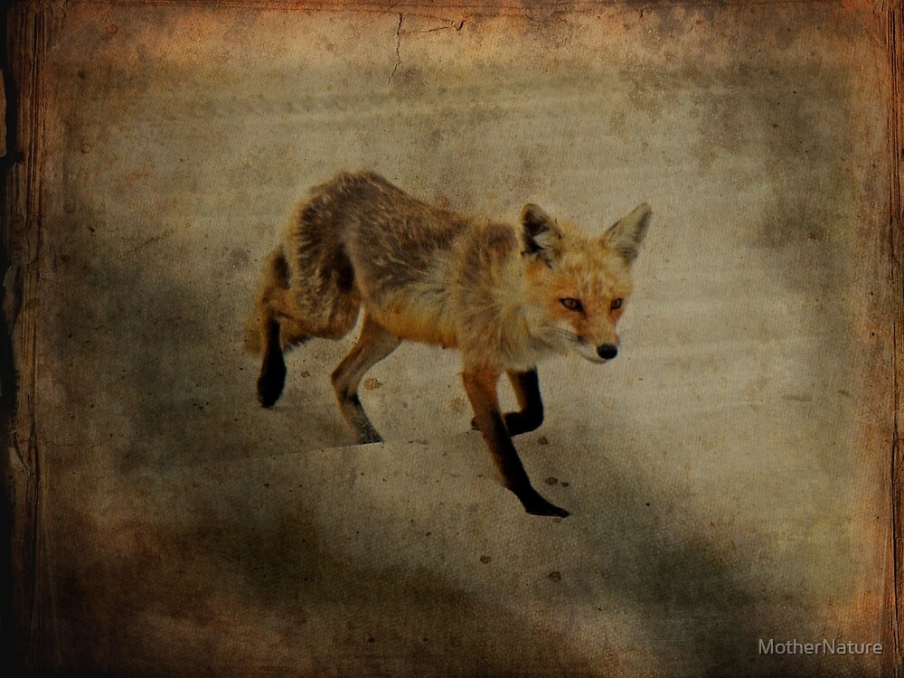 On The Prowl by MotherNature