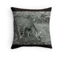 White-Tailed Deer - Buck - Odocoileus virginianus Throw Pillow