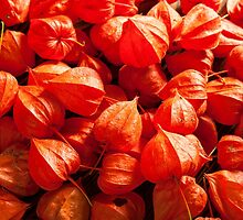 physalis by SIR13