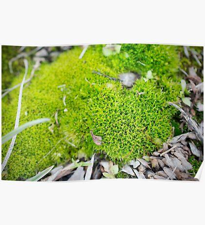 Green moss Poster