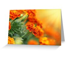 tagetes flower Greeting Card