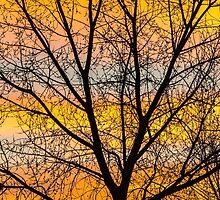 Caged Sunrise by nikongreg