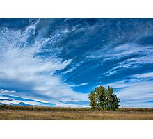 Blue Skies Sing Of Trees Photographic Print
