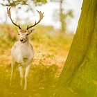 Fallow Stag 2 by Mike Garner