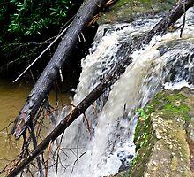 Marsh Fork Falls by Paul Lubaczewski