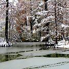 A winter day by annalisa bianchetti