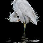 Snowy Egret Preening by Tarrby