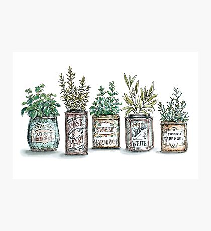 Herbs in Vintage Tins Photographic Print