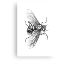 Flying Insect Canvas Print