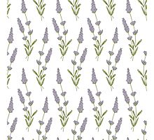 lavender pattern Photographic Print