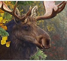 bull moose portrait amid aspen and spruce Photographic Print