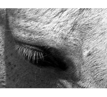 Lashes Photographic Print