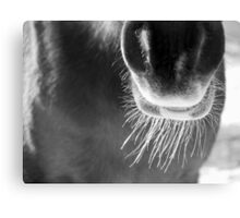 Winter Whiskers Canvas Print