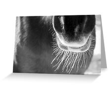 Winter Whiskers Greeting Card