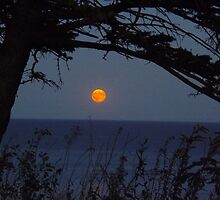Red Moon Rising by Timothy  Ruf