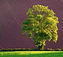 Late light on Lone Tree by peteton