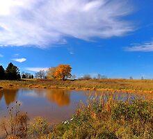 Forest Beach Migratory Preserve Pond by Timothy  Ruf