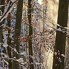 Golden Snow Flurry by Kasia-D