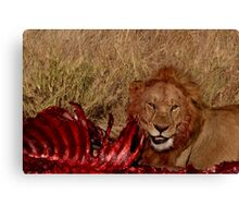 Lion smiling at the camera Canvas Print