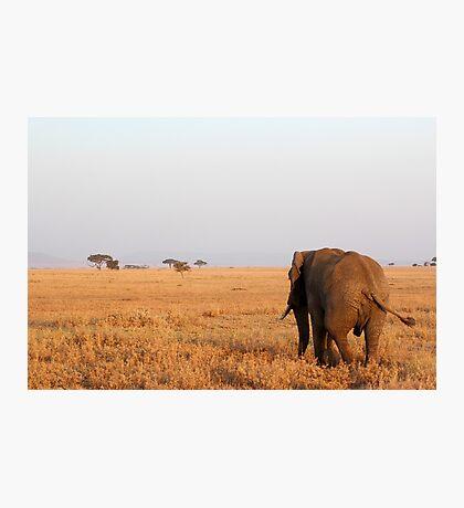 Elephant walking away Photographic Print