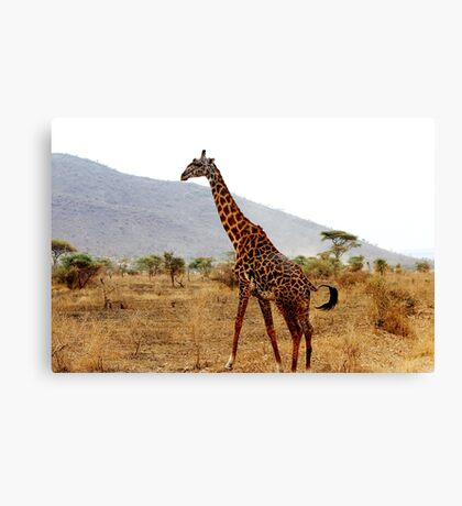 Giraffe on the move Canvas Print