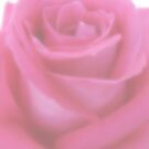 Soft Pink Rose by Ra12