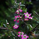 Pink - Native by Evita