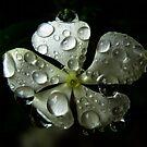 Evening Rain by iamelmana