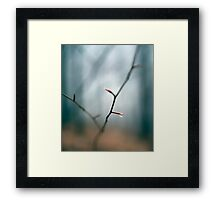 Raindrop on a twig in the forest Framed Print