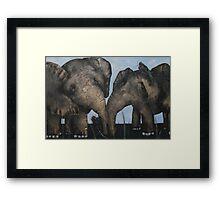 Wacky Birds on Baby Elephants Framed Print
