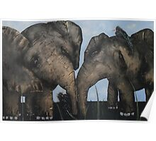Wacky Birds on Baby Elephants Poster