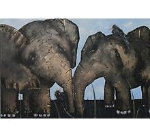Wacky Birds on Baby Elephants Photographic Print