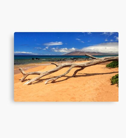 A Branch On Keawakapu Beach Canvas Print