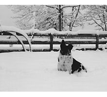 Snow dog (North Saanich, Vancouver Island, British Columbia, Canada) Photographic Print
