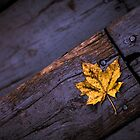 Little Yellow Leaf by Amy Mitchell