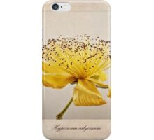 Hypericum calycinum iPhone Case/Skin