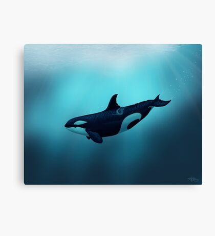 Lost in Serenity ~ Orca ~ Killer Whale Canvas Print