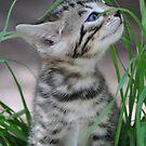 Kitten in the Grass by Coralie Plozza