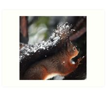 Red squirrels tails are useful things Art Print