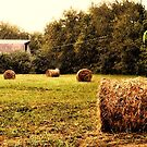"""""""Bales Along the Tree line""""... prints and products by © Bob Hall"""