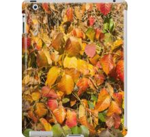 Autumn's Paint Brush iPad Case/Skin