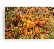 Autumn's Paint Brush Canvas Print